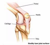 Здоровый коленный сустав